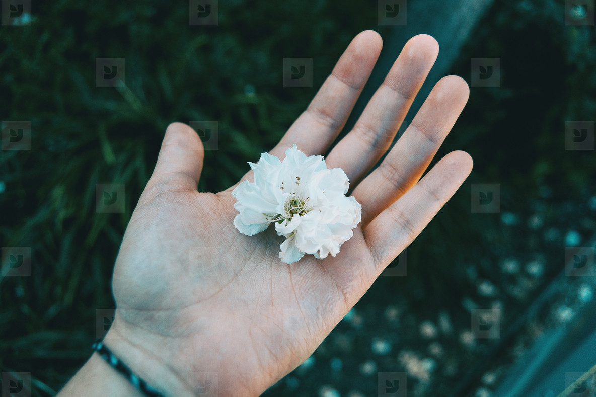 Close up of a white flower held by a human hand