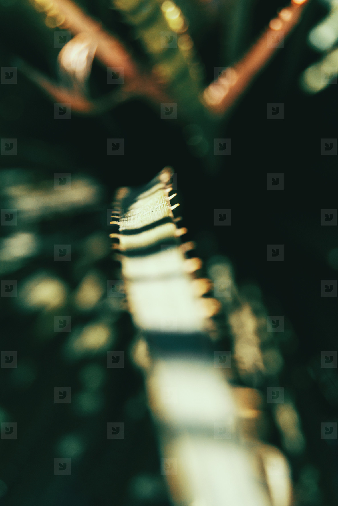 Close up of light stripes in a plants leaf