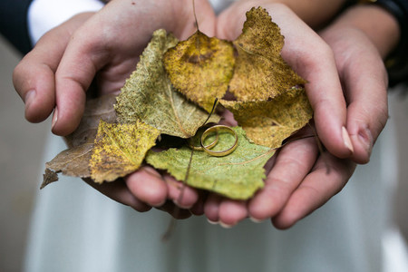 Bride and groom holding wedding rings and autumn leaves in hands