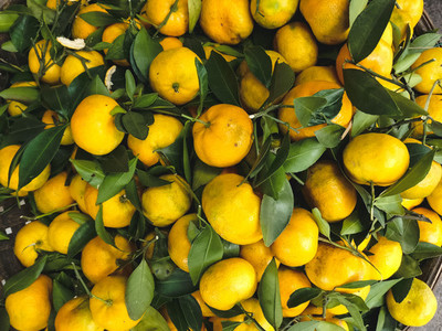 Orange tangerines with leaves