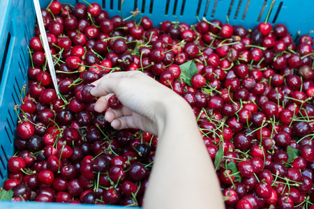 Purchasing cherries at market