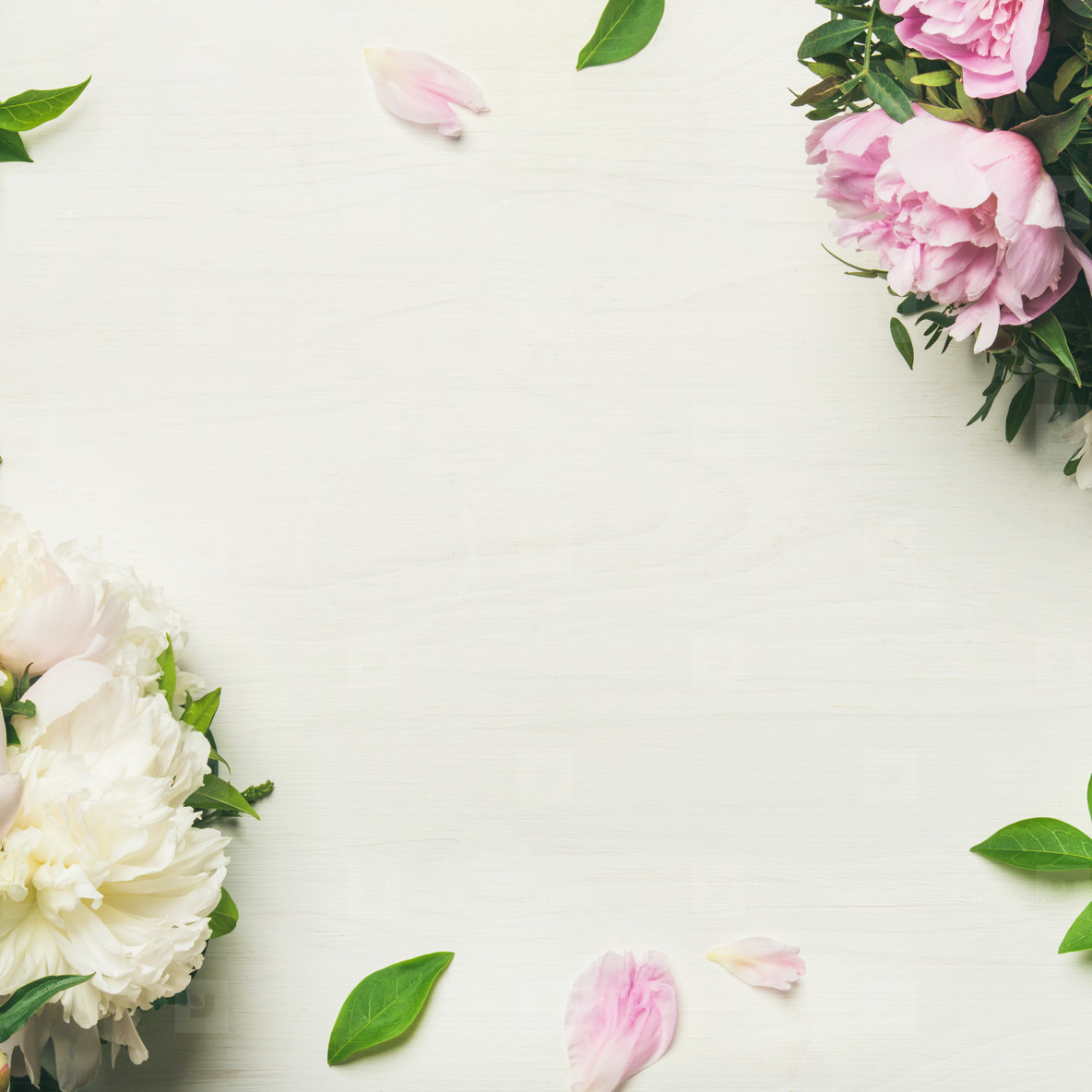 Photos Flat Lay Of Peony Flowers Over White Background Copy Space
