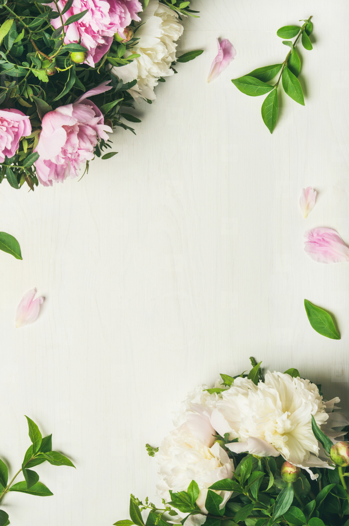 Photos Flat Lay Of Peony Flowers Over White Background Copy