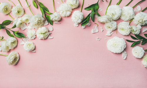 Saint Valentines Day background with ranunculus flowers over pink background