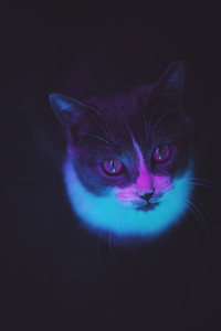 Kitten under colorful neon light