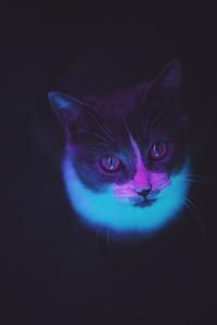 Kitten under colorful neon light