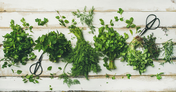 Various fresh green kitchen herbs