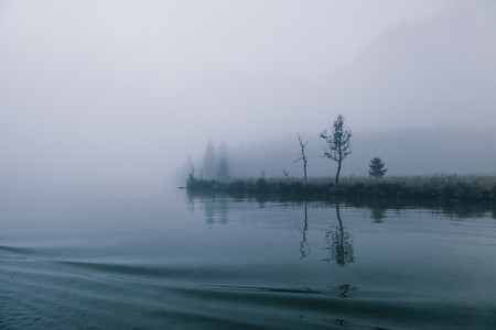 views of forest among fog in border of the lake with mysterious trees