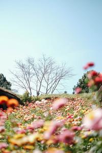 Beautiful garden flowers on hill