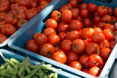 Shiny ripe tomatoes