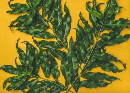 Tropical tree green leaves over bright yellow background  top view