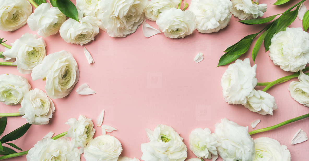 Saint Valentines Day frame or background with ranunculus  wide composition