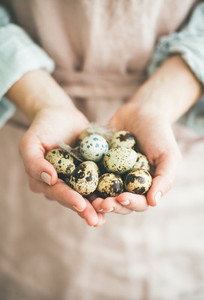 Natural colored quail eggs and feather in womans hands  close up