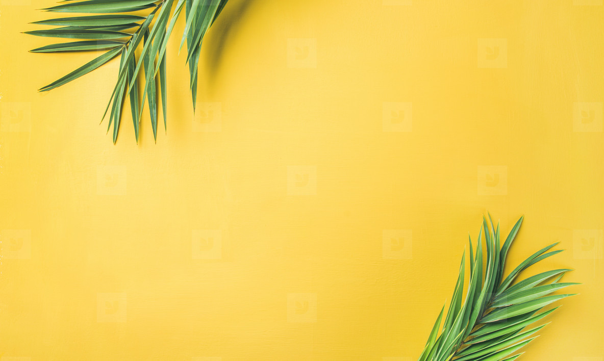 Green palm branches over yellow background  wide composition