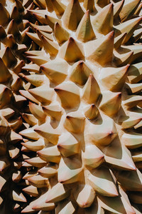 Durian Spikes