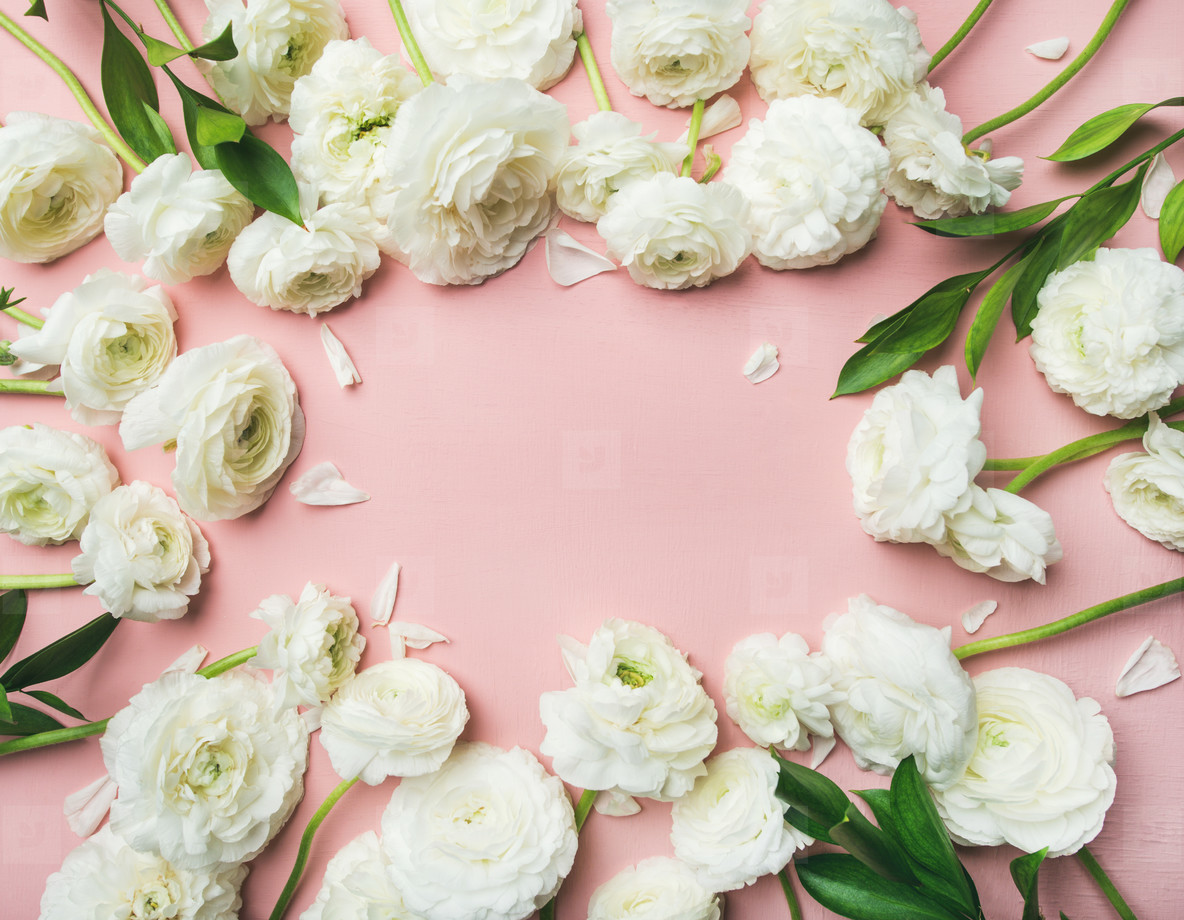 Saint Valentines Day frame or background with ranunculus  copy space