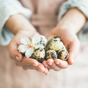 Quail eggs and almond flower in womans hands square crop