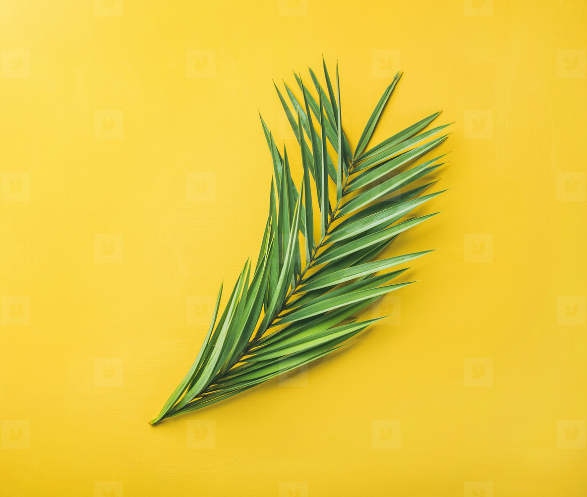 Green palm branches over yellow background  top view