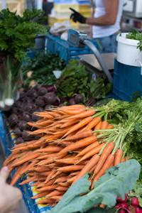 Crunchy newly harvested carrots