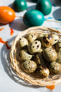 Easter quail and colored eggs