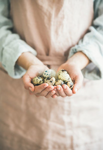 Natural Quail eggs and feather in womans hands for Easter