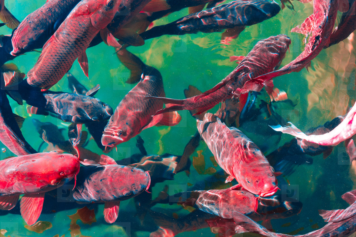 In the ocean  fish swim