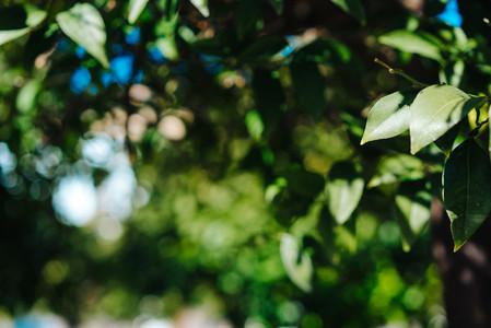 Green foliage of trees