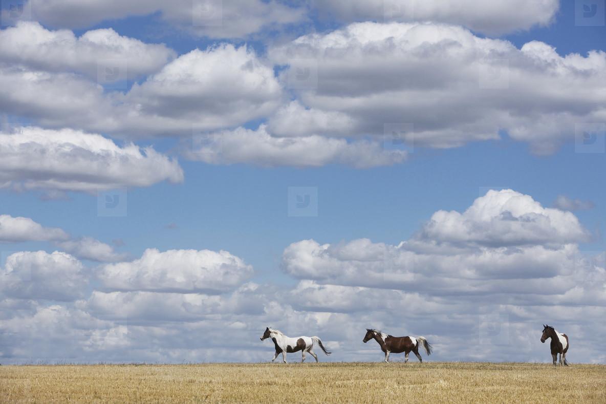 Cross Country Farm  02