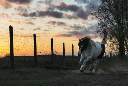 Cross Country Farm 13