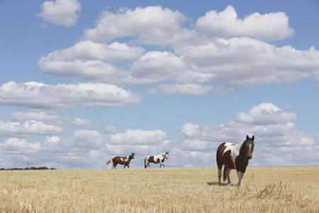 Cross Country Farm 17