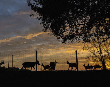 Cross Country Farm 20