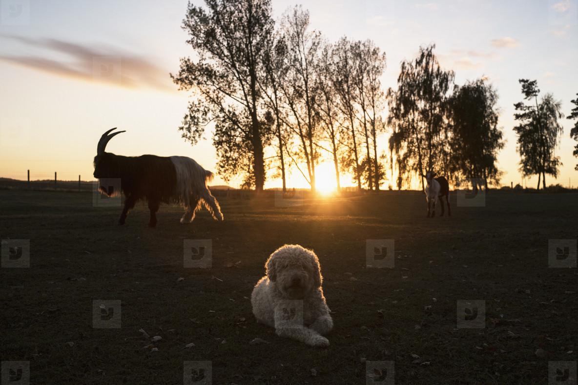 Cross Country Farm  25