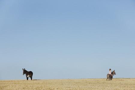 Cross Country Farm 26