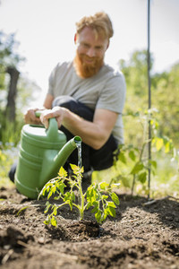 Urban Gardening 05