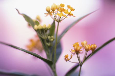 Flower Zoom 02