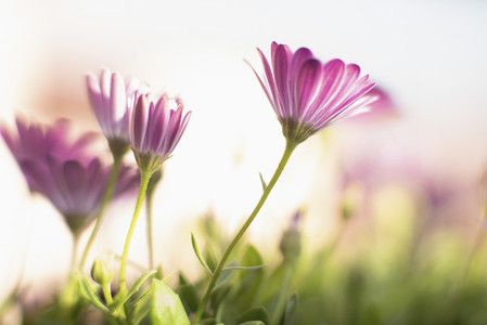 Flower Zoom 05