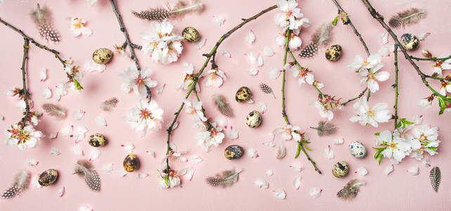 Easter background with eggs  almond flowers and feathers  top view