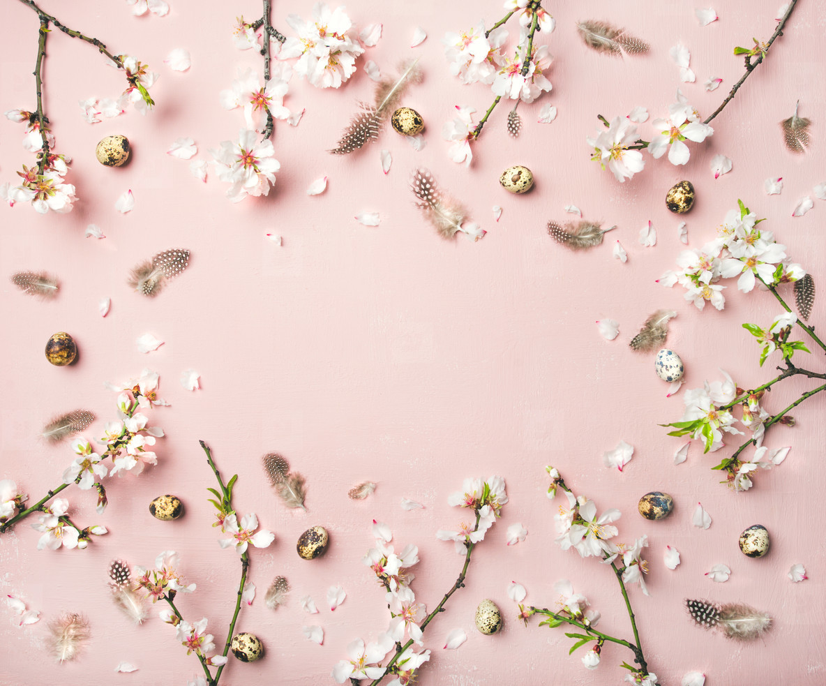 Easter background with eggs  almond flowers and feathers  copy space