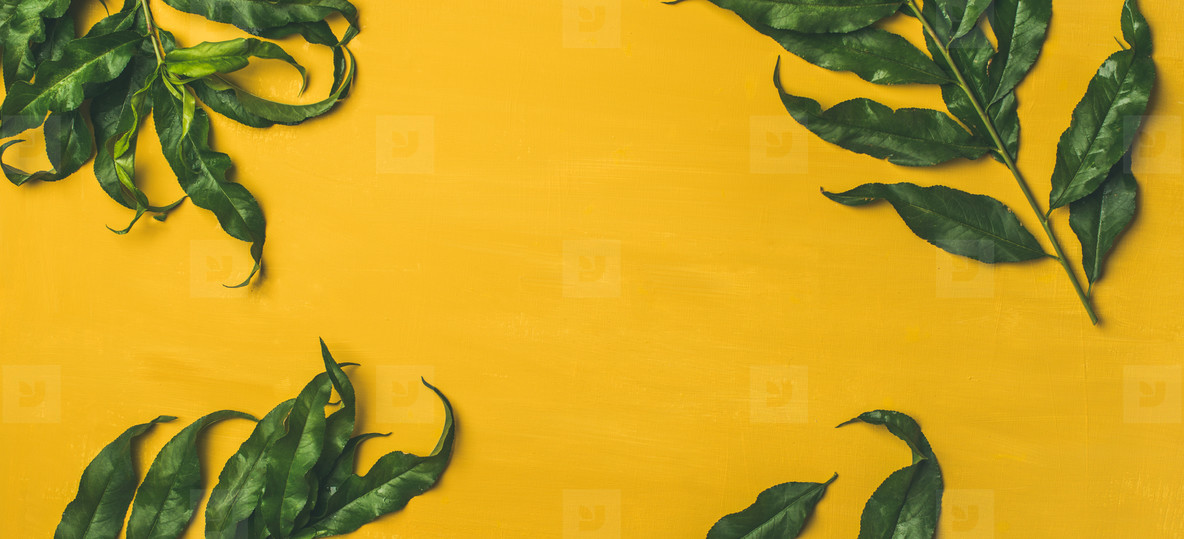 Tropical tree green leaves over bright yellow background