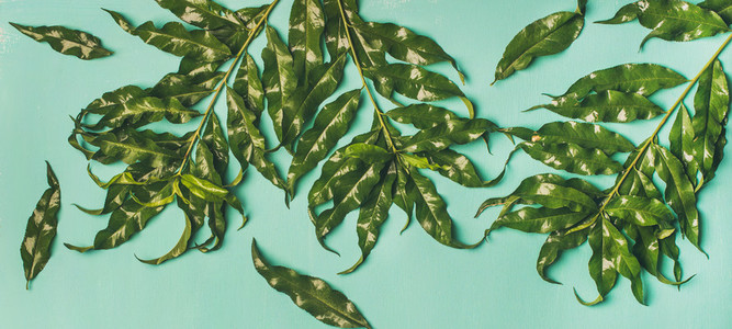 Tropical tree green leaves over pastel mint background