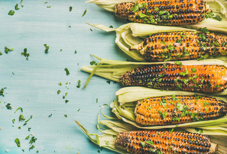 Grilled sweet corn with cilantro over blue background copy space
