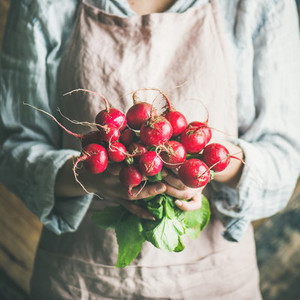 Female farmer holding bunch of radish with leaves  square crop