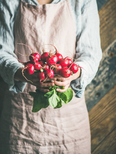 Female farmer in apron holding bunch of radish with leaves
