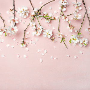 Spring almond blossom flowers over light pink background  square crop