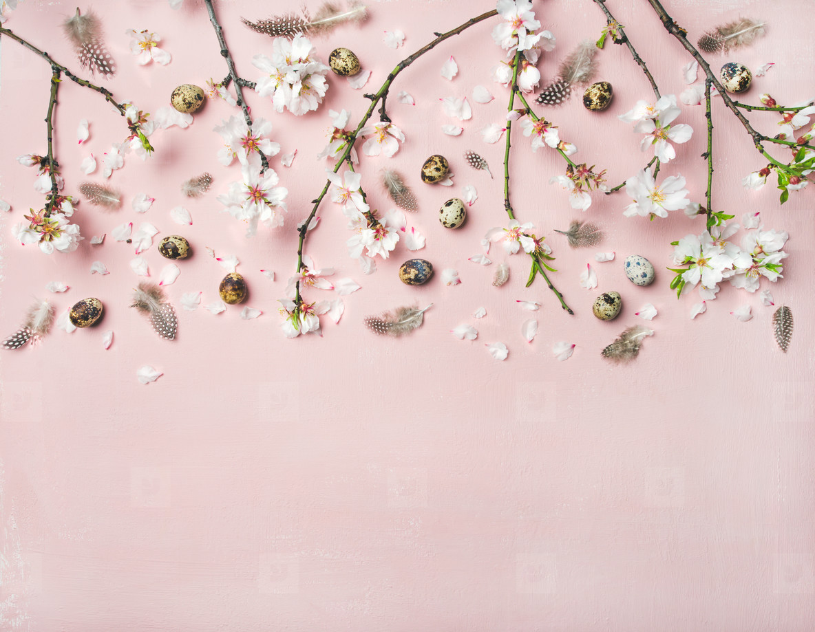 Easter background with eggs  almond flowers and feathers