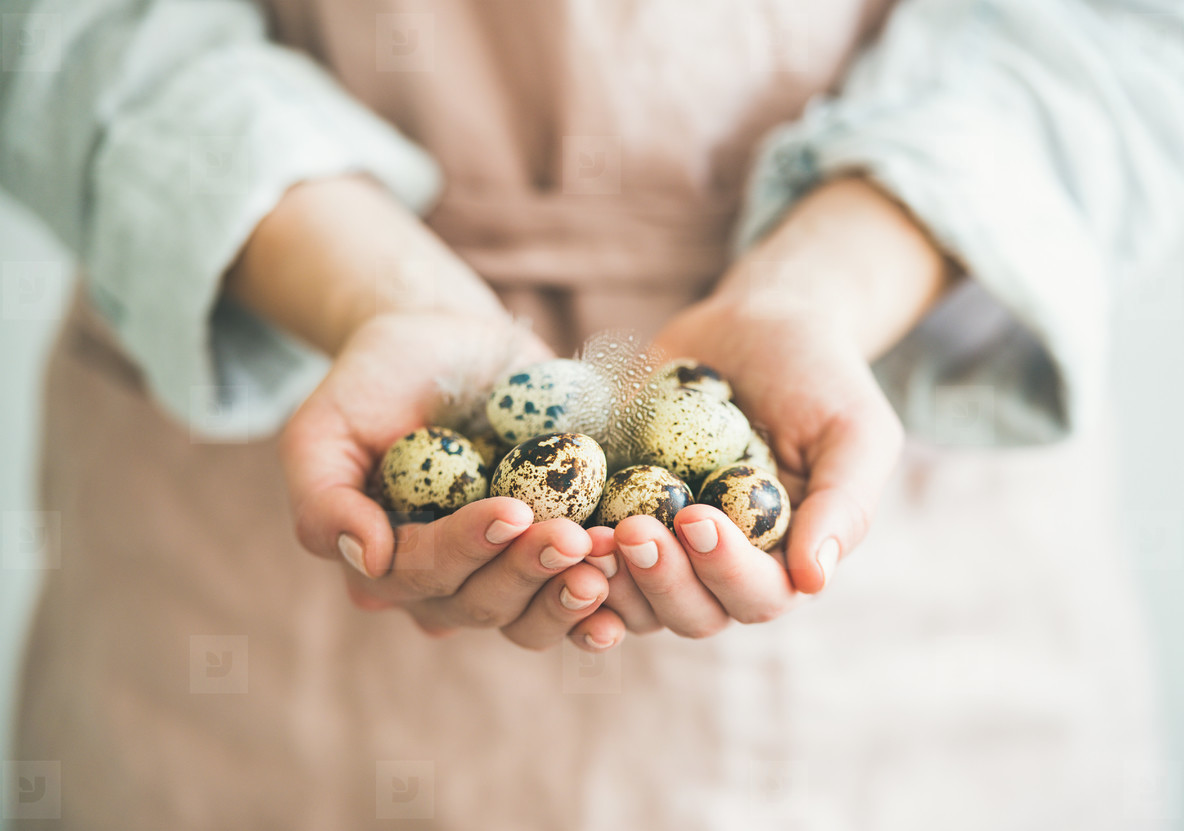 Quail eggs and feather in womans hands  horizontal composition