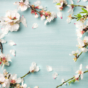 Spring almond blossom flowers over light blue background square crop