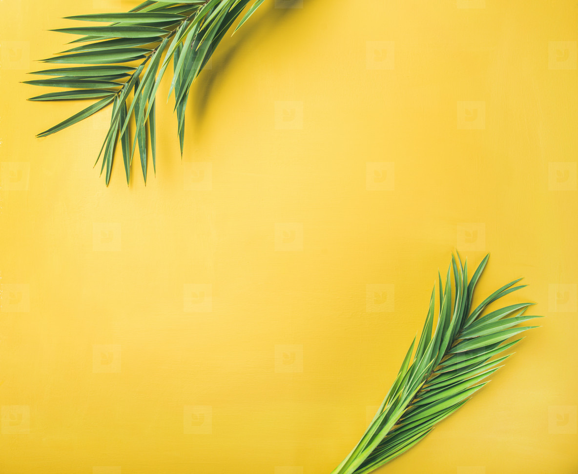 Green palm branches over yellow background