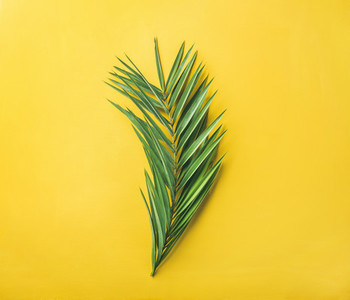Green palm branch over bright yellow background top view