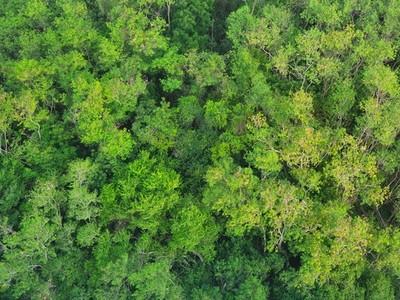 Trees 170392